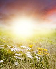 Foto op Aluminium Zwavel geel Meadow