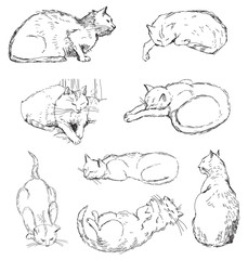 Cats, set of vector sketches