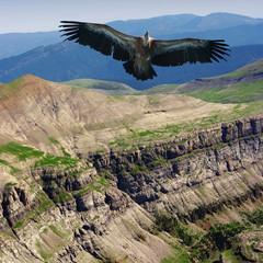 Wall Mural - vulture
