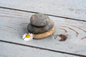Acrylic Prints Daisies Zen stenen met bloemen op oud hout.