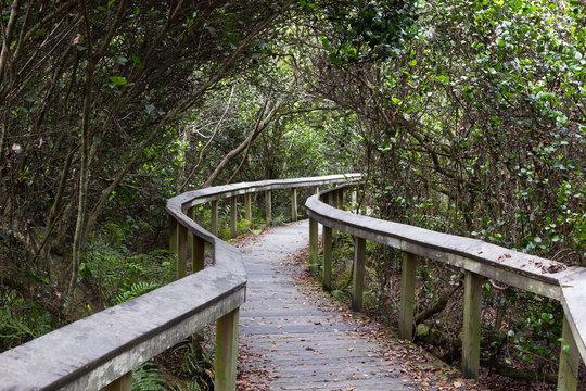 Observation trail, Everglades
