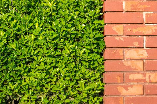 brick wall and a green bush