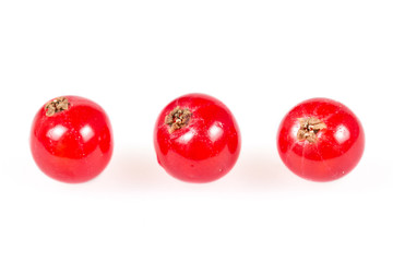 Red currants isolated on white background