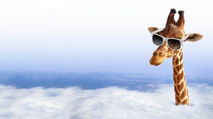 Funny giraffe with sunglasses coming out of the clouds Wall mural