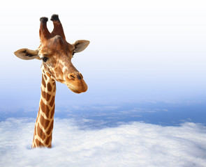 Funny giraffe with coming out of the clouds