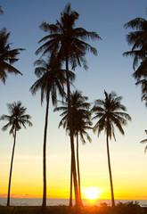 Palm Paradise Sunset Divine