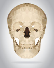 Wall Mural - Human skull vector isolated geometric illustration