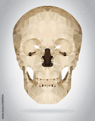 Wall mural Human skull vector isolated geometric illustration