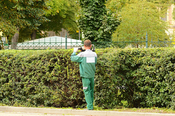 Worker trimming hedge