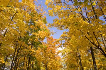 yellow leaves on the trees