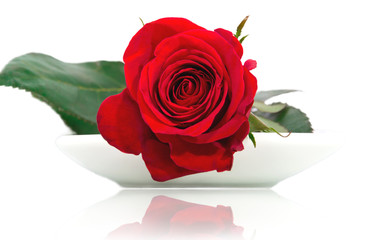 Red rose on a white plate
