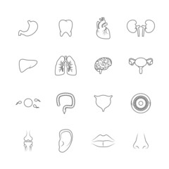 Human organs icons outline