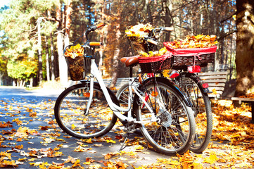 Two walking bicycles in autumn park with yellow leaves in basket
