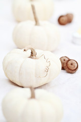 White Pumpkins and Acorns