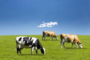 Kühe auf der Weide Wall mural