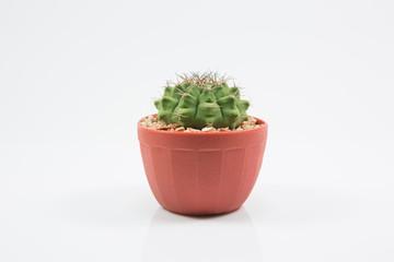 isolation cactus