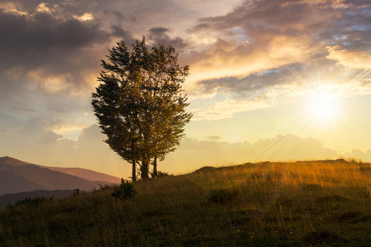 trees near valley in mountains  on hillside at sunset