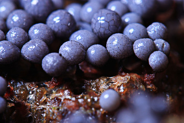 micro-organism fungus mold structure