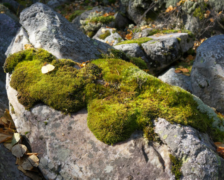 moss on the stone.