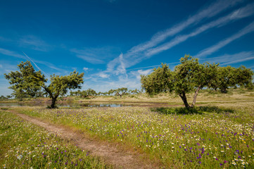 Extremadura, Spain. Pastures, many oak trees and blue sky