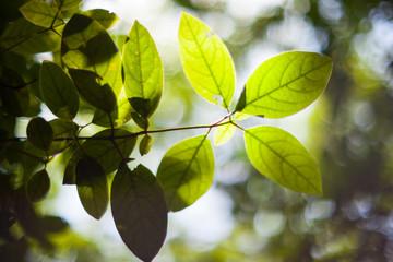 Leaves of tree