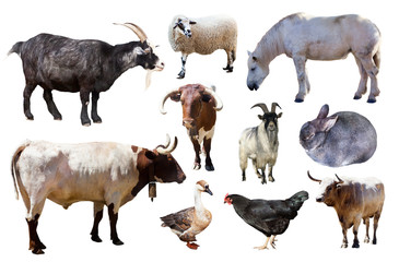 Set of farm animals on white