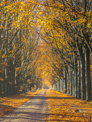 Road with Yellow Foliage of Birch Trees during Autumn
