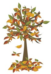 Autumn tree, object white isolated, vector