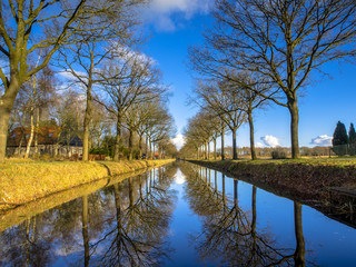 Wall Mural - Row of Trees reflecting in a long Straight Canal in the Netherla