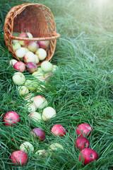 Ripe apples scattered