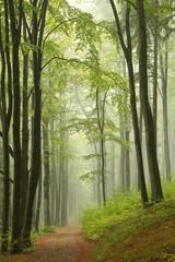 Garden Poster Forest Trail through misty autumn forest