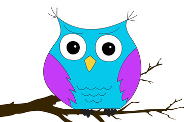 colorful owl sitting on the branch