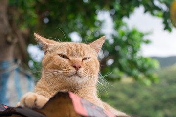 Ginger tabby cat lying on the roof.