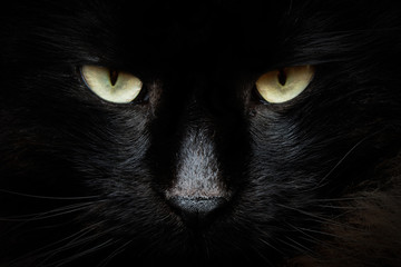 Obraz gatto nero - fototapety do salonu