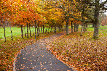 autumn leaves park footpath