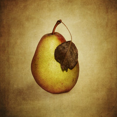Pear with wilted leaves