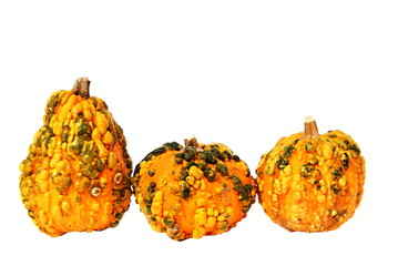 Decoration with three pumpkin on isolated background