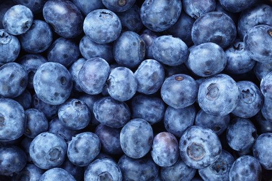fresh ripe  blueberries berries
