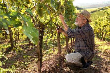 Garden Poster Vineyard Man working in a vineyard