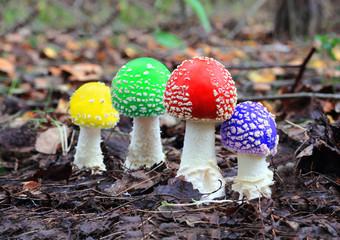 four multicoloured fly agaric