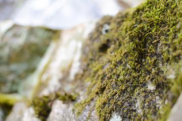 pietra sarda