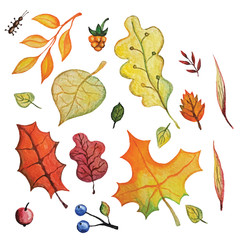 Vector Watercolor autumn Leaves set