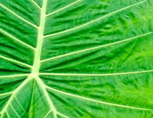 juicy green leaves of plants