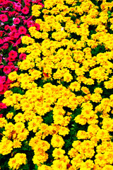 The bright colors of lawn plants