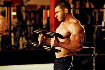 bodybuilder training gym, hammer curls