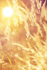 Fototapete - Art autumn sunny nature background