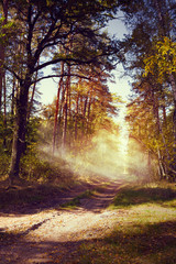 art beautiful autumn forest landscape with road in sunset