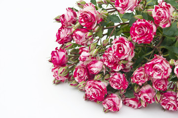 Bouquet of red-white roses, isolated on white