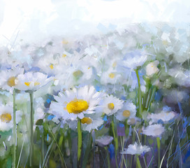 Daisy flowers.Abstract flower oil painting