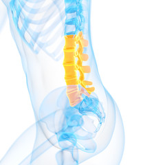 medical 3d illustration of the lumbar spine